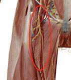 大腿神経アプローチ